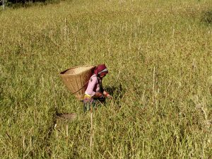 Nepal Landwirtschaft